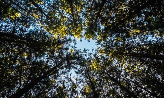 TREE CANOPY FROM CITY SCALE TO STREET LEVEL, A NEW TOOL BY GOOGLE
